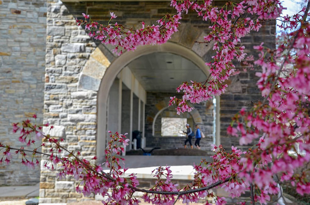 Cherry blossoms hang down in front of arches, where students can be seen walking in the background